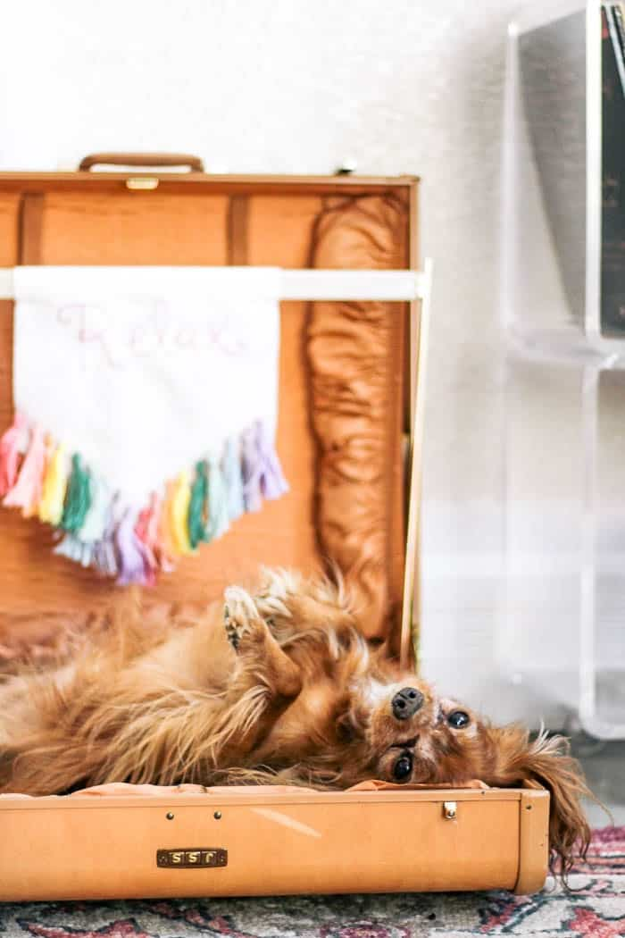 Diy Suitcase Dog Bed At Home With Ashley